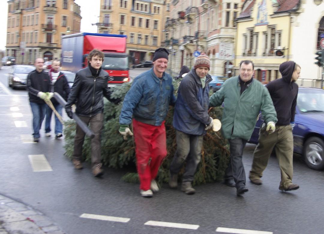 Jedes Jahr ist es ein Ereignis, wenn freiwillige Helfer die beiden Weihnachtsbäume für die Loschwitzer Kirche holen. Foto: Jürgen Frohse