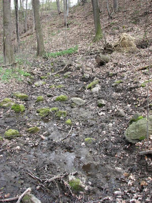In diesem Quellgebiet am Nordrand von Rockau beginnt die Kucksche. Foto: Landeshauptstadt Dresden, Umweltamt