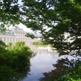 Wasserschloss Pillnitz - der Fliederhof ist eine Seenlandschaft.