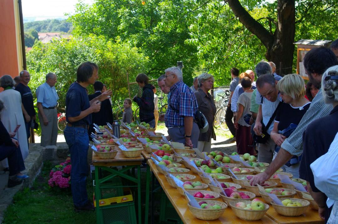 Der Pomologen-Verein e.V. präsentierte eine Vielzahl heimischer, wertvoller (und in Vergessenheit geratener) Apfelsorten. Foto: Helene Blumenschein