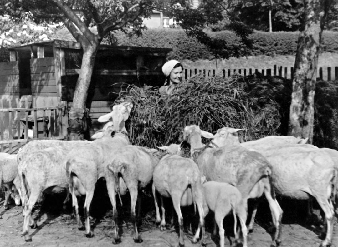 """Die """"Schafstante"""" mit ihrer Herde  Foto: Gabriele Sonntag"""