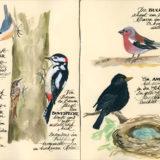 Vogelwelt_05_06_VB